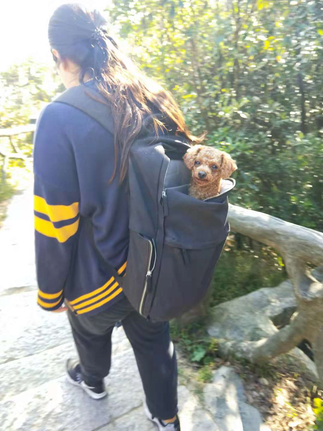 XY-GLBAL TEAM take a dog to climbing mountain